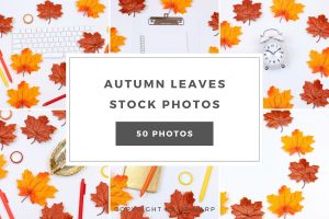 preview-autumn-leaves